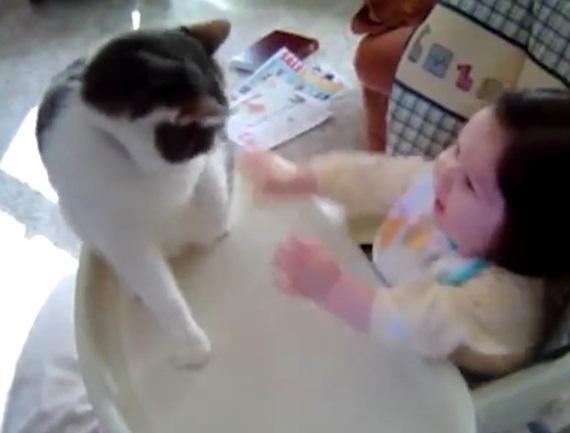 Zábava s mačkami