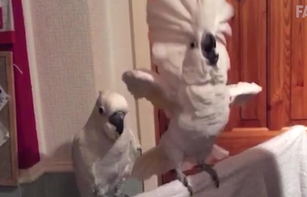 Mačky vs vtáky