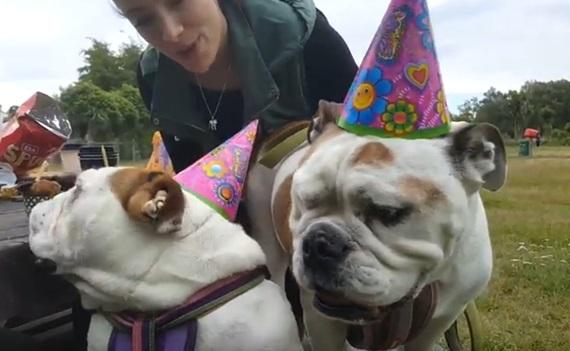 Psi, najlepší priatelia failov