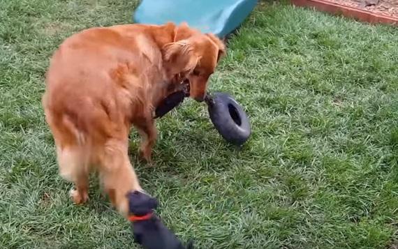 Najzábavnejšie psy