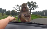 Zábavné zvieratká