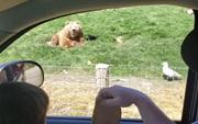 Zábavné medvede