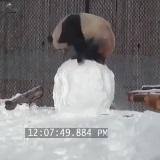 Panda a sneh