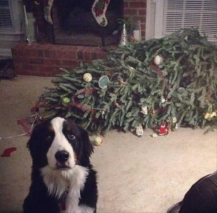 Zvieratá a Vianoce