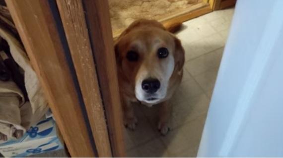 Keď váš pes nechce, aby ste odišli