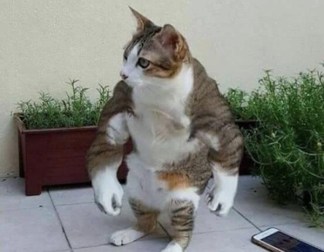 Jednoducho mačky