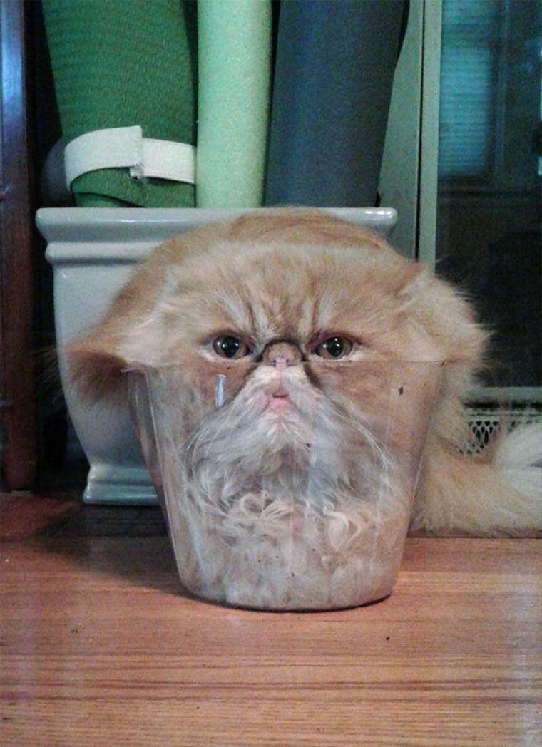 Mačky majú dva stavy, pevný a tekutý