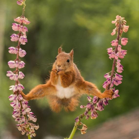 Zábavné fotky zvierat v prírode