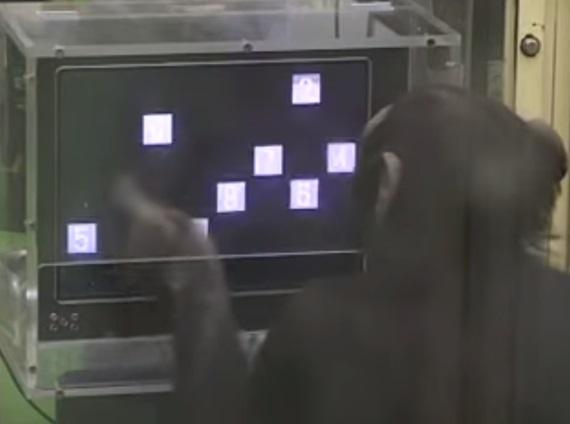 Keď je opica múdrejšia ako ty