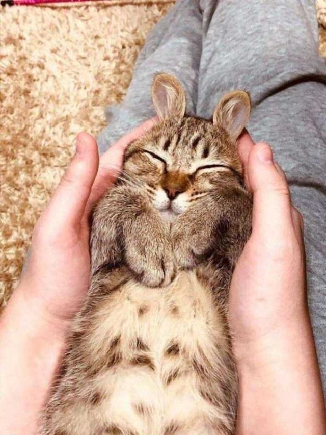 Niečo pre milovníkov zvierat