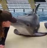 Aj delfín sa má lepšie ako vy