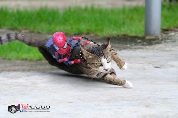 Mačky a Spiderman