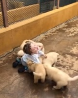 Záznam z brutálneho útoku psov na dieťa