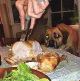 Keď máte poriadne vychovaného psa