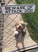 Pozor na zlého psa!