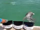 Keď aj delfín vie lepšie recyklovať ako vy