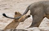 Najlepšie fotky zo života zvierat