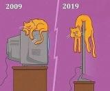 Mačky to dnes majú ťažké