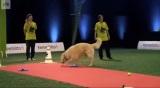 Niektoré psi poslúchajú na slovo a iné sú Retríveri