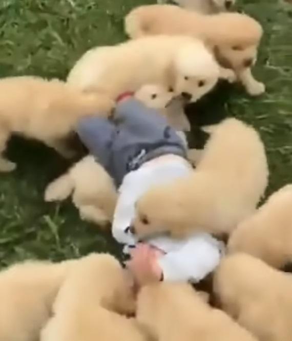 Nebezpečné psy