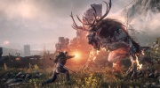 N�dhern� Witcher 3