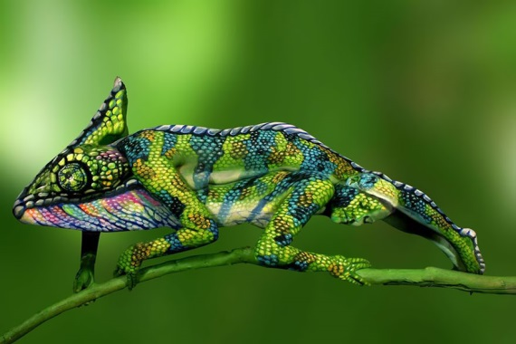 Chameleón?