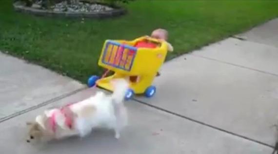 Psy maj� radi deti....