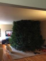 Kúpili ste veľký stromček?
