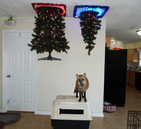 Ako ochrániť vianočný stromček pred mačkou a psom?