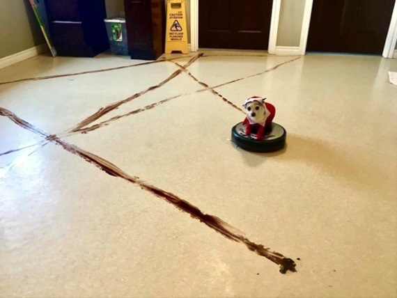 Pes a Roomba