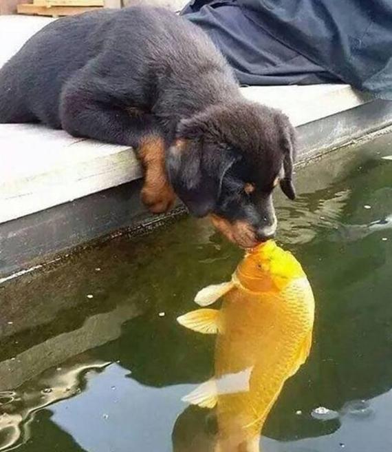Zlat� rybka, daj mi pusu...