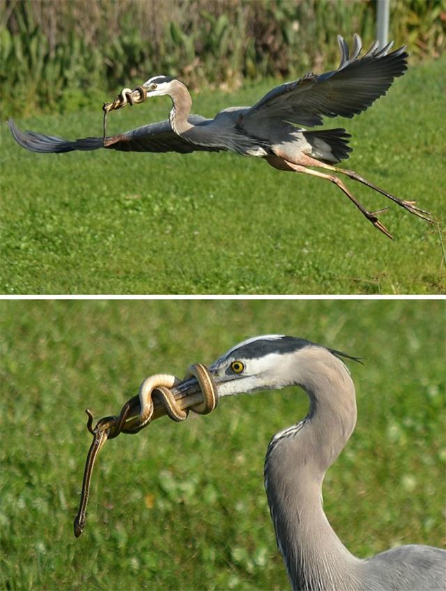 Zábavné zvieratá