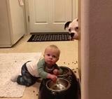 Keď pes príde o večeru