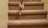 Keď sa mačka učí chodiť po schodoch