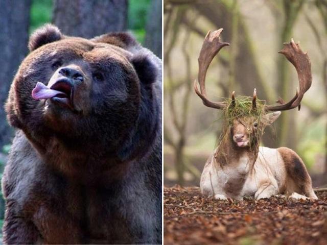 Majestátne zvieratá