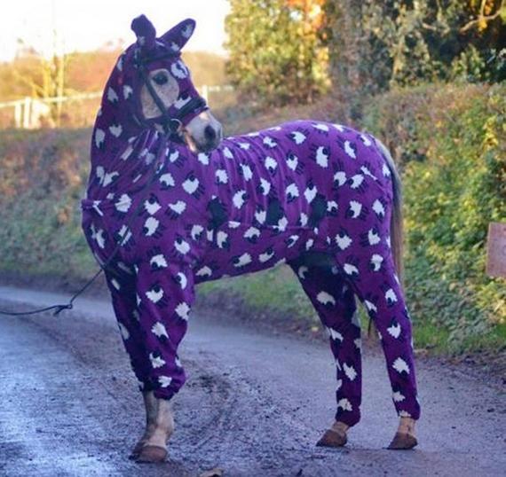 Lebo aj kôň chce spať štýlovo