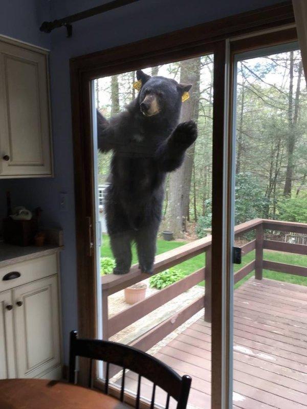 Človek, si doma?