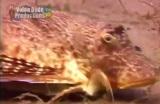 Videli ste už rybu s nohami?