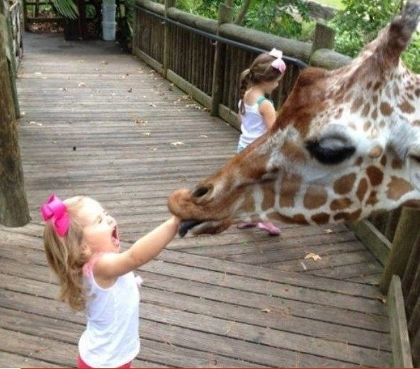 Keď kŕmite zvieratá...