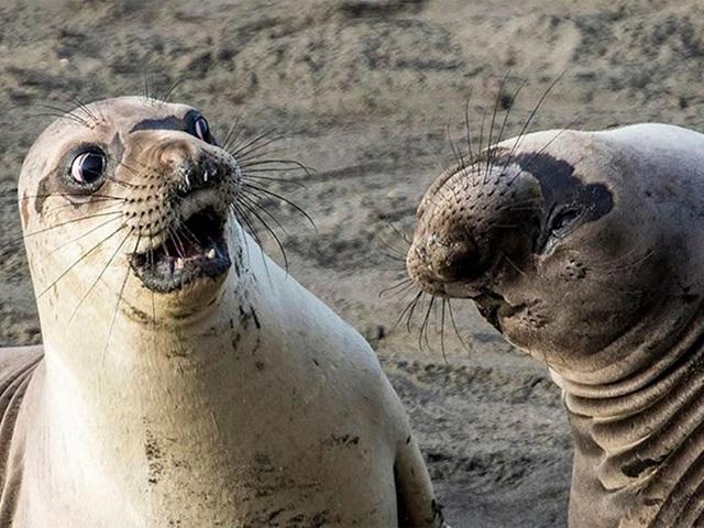 Najlepšie zábavné fotky z prírody