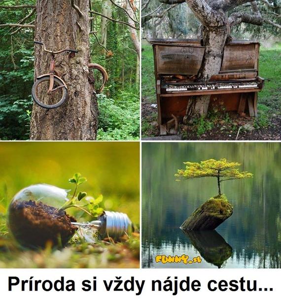 Príroda si vždy nájde cestu