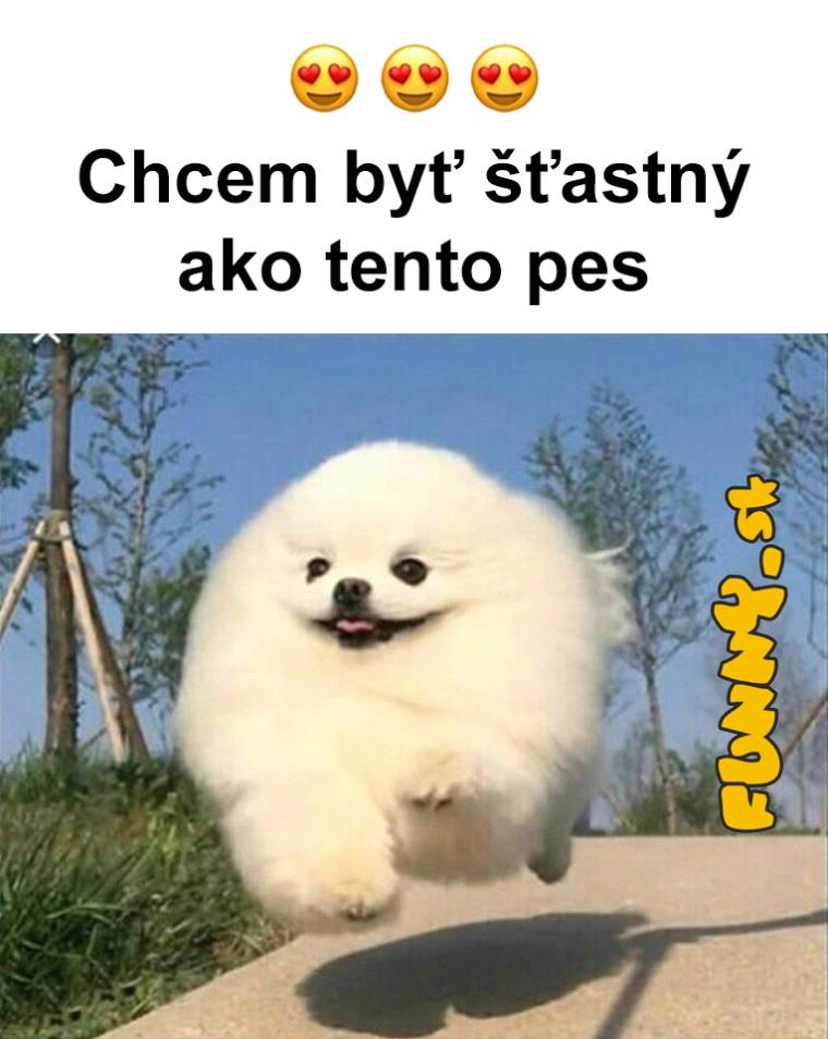 Šťastný ako pes