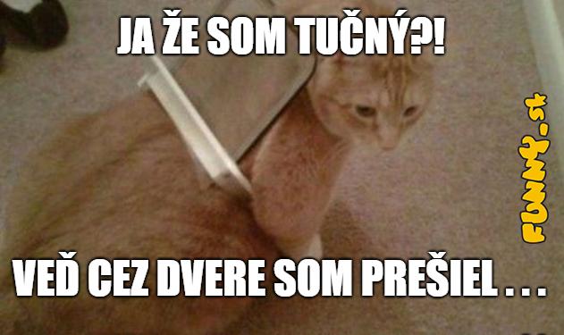 Mačka a dvere