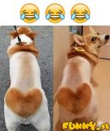 Ostrihaný doggo