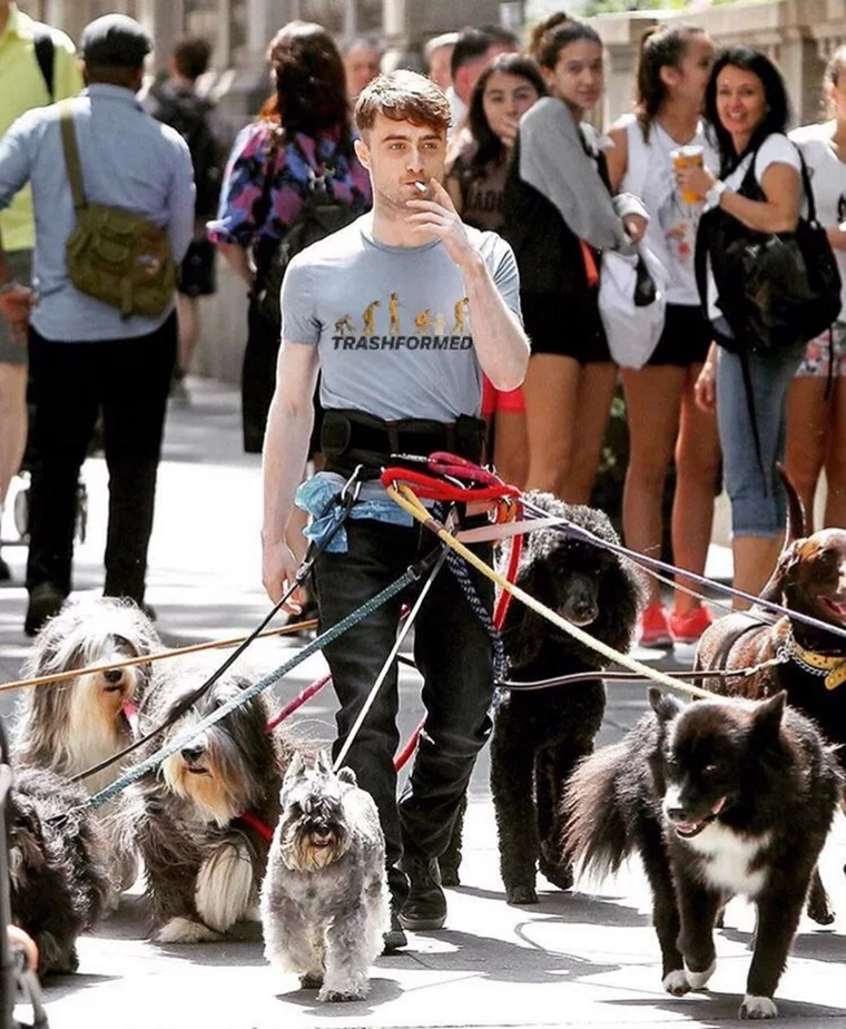 Harry Dogger